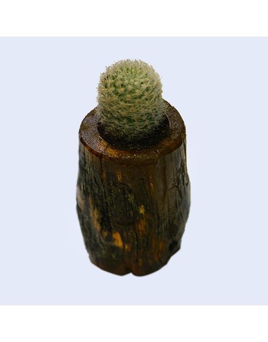 Macetero de madera con cactus