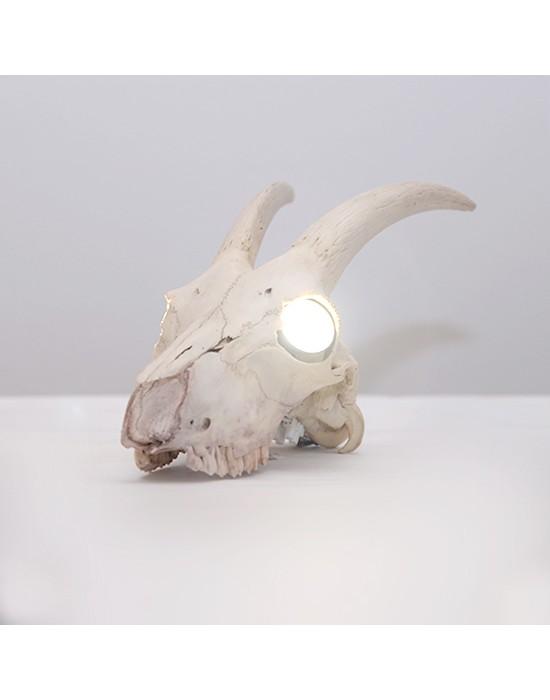 Lámpara con cráneo de cabra salvaje